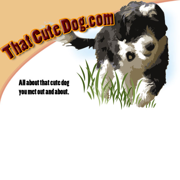 That Cute Dog.com - All about that cute dog you met out and about